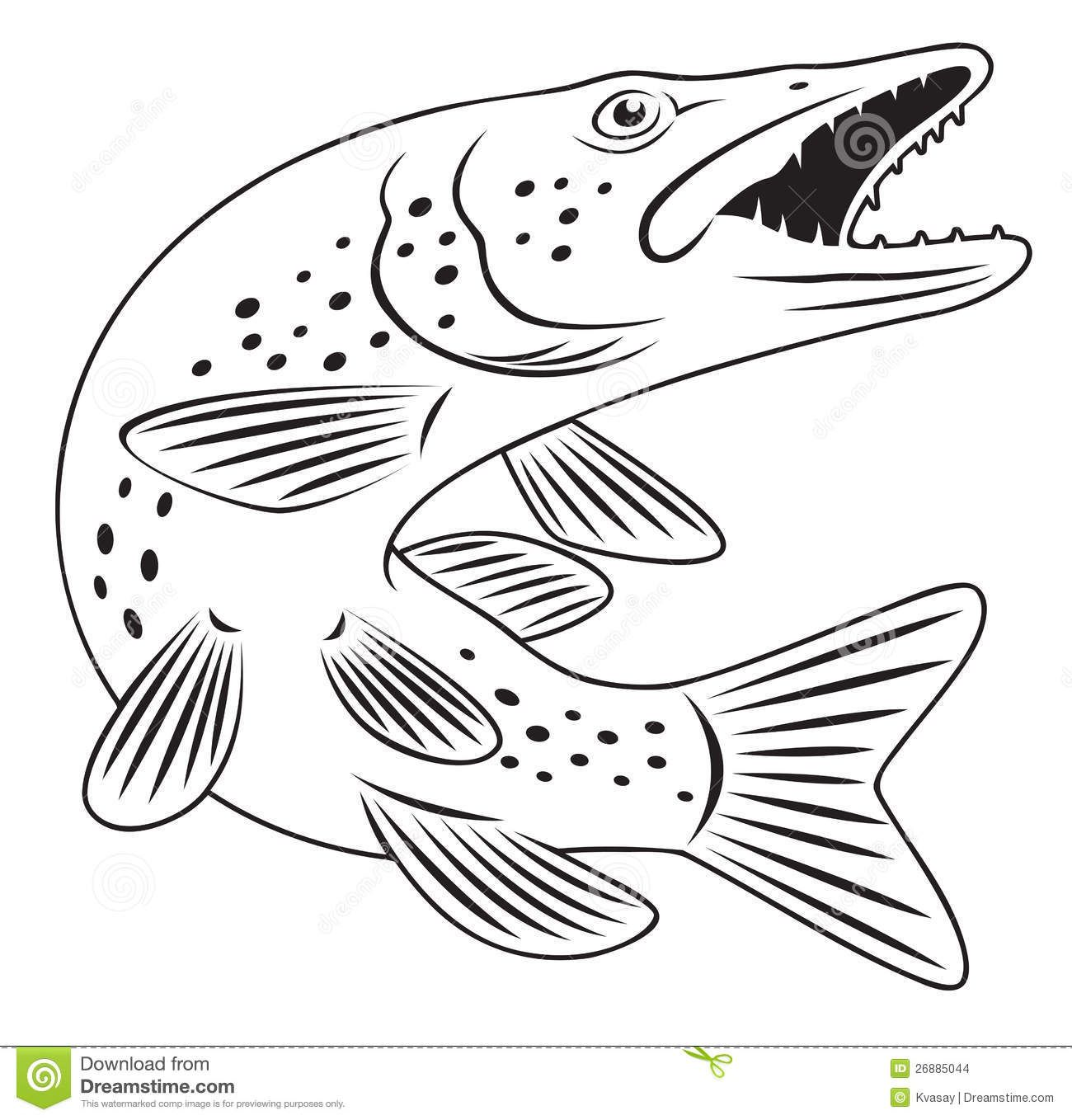 Pike Fish Stock Images Image 26885044 Fish Coloring Page