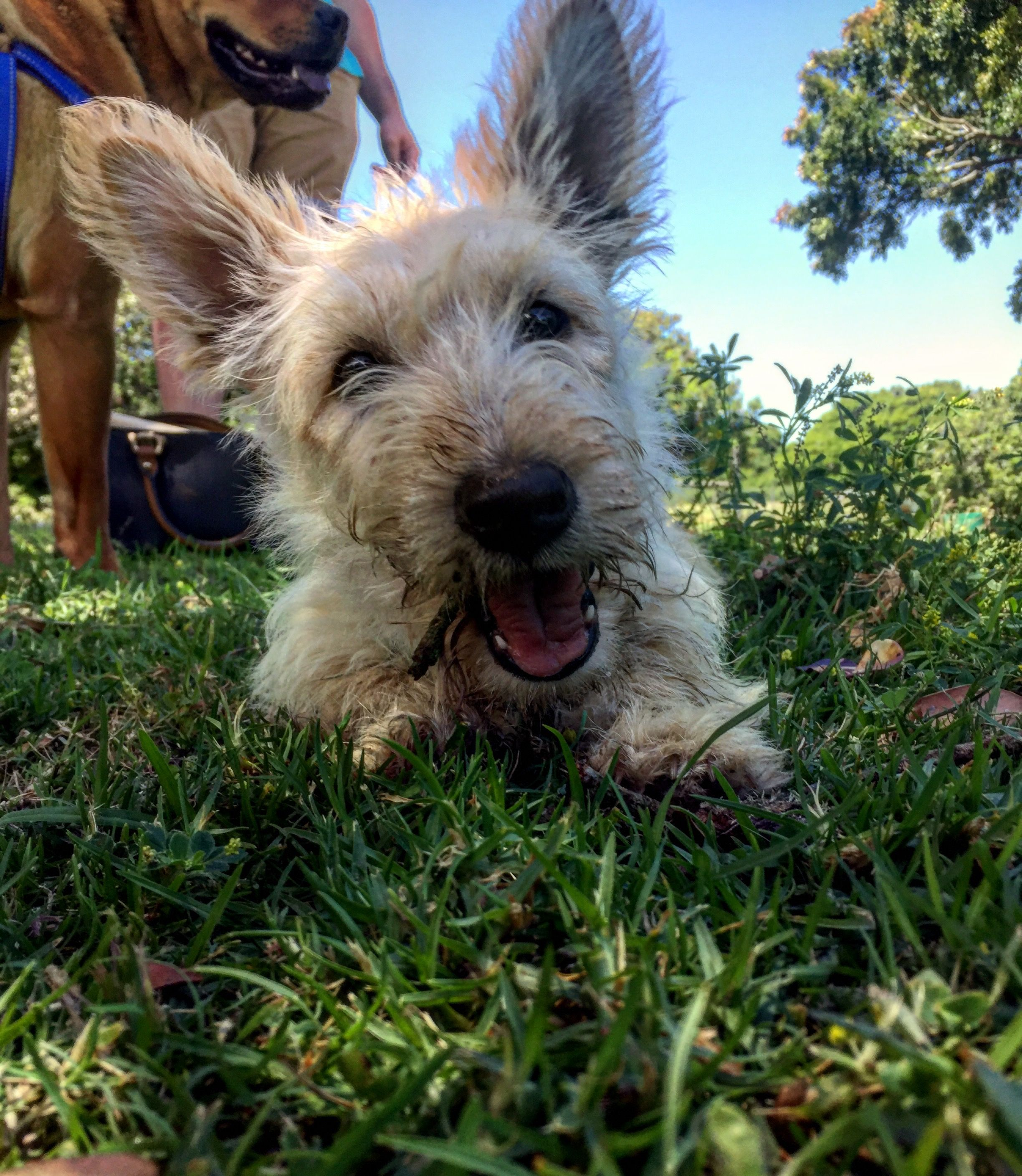 Pin On Dirty But Delighted Westies Scotties