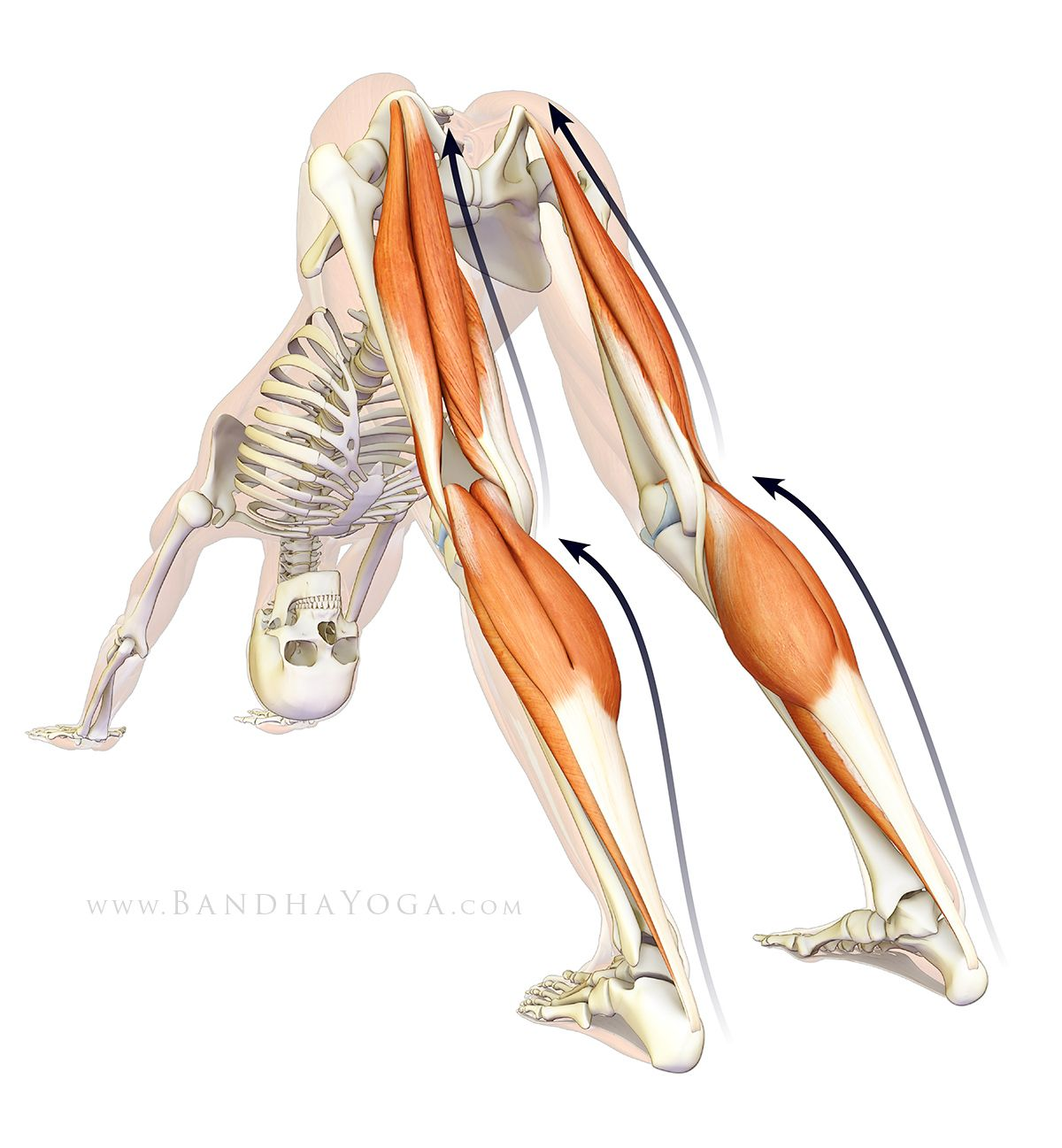 Pin de Chris Norie en yoga | Pinterest | Conexión, Yoga y Anatomía