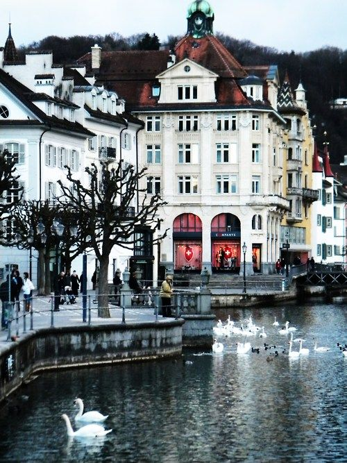 Lucerne, Switzerland...known for its swans, bridges, and flowers