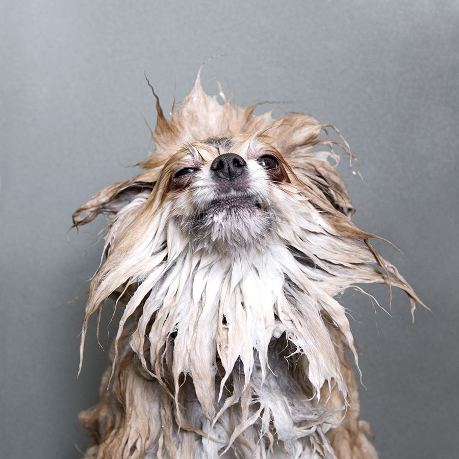 Image Result For Wet Dog Perros Mojados Perros Fotografia De Perro