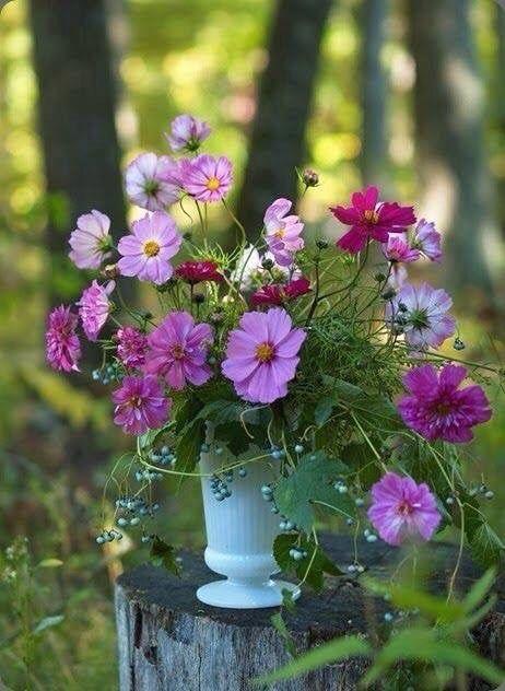 Moment S Kosmos Blumen Blumen Pflanzen Schone Blumen