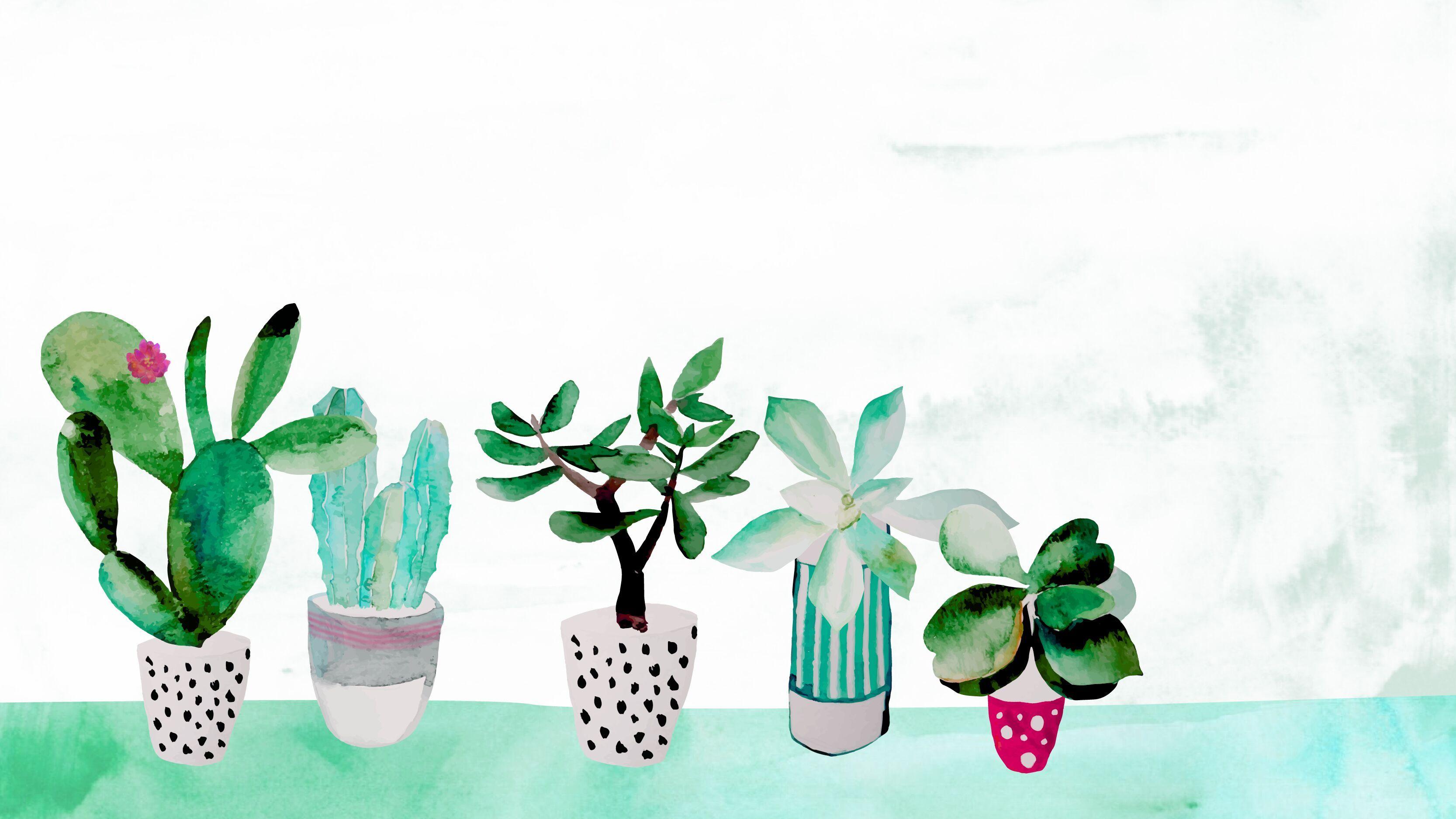 Aesthetic Plant Wallpaper Desktop
