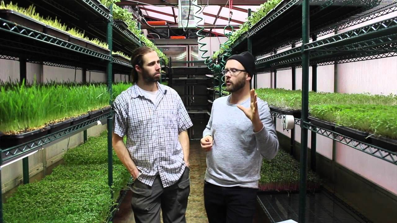 Commercial Microgreens Operation Curtis Stone w/ Chris