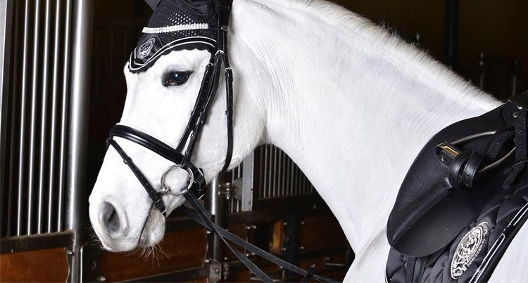 www.equista.pl   Schockemohle Chrome Limited collection 2014/2015   Schockemohle kolekcja kolekcja limitowana 2014/2015   schockemoehle-sports.com   #equestrian #winter #horseriding #fashion #schockemohle #collection #fall #horse #riding #chrome #limited
