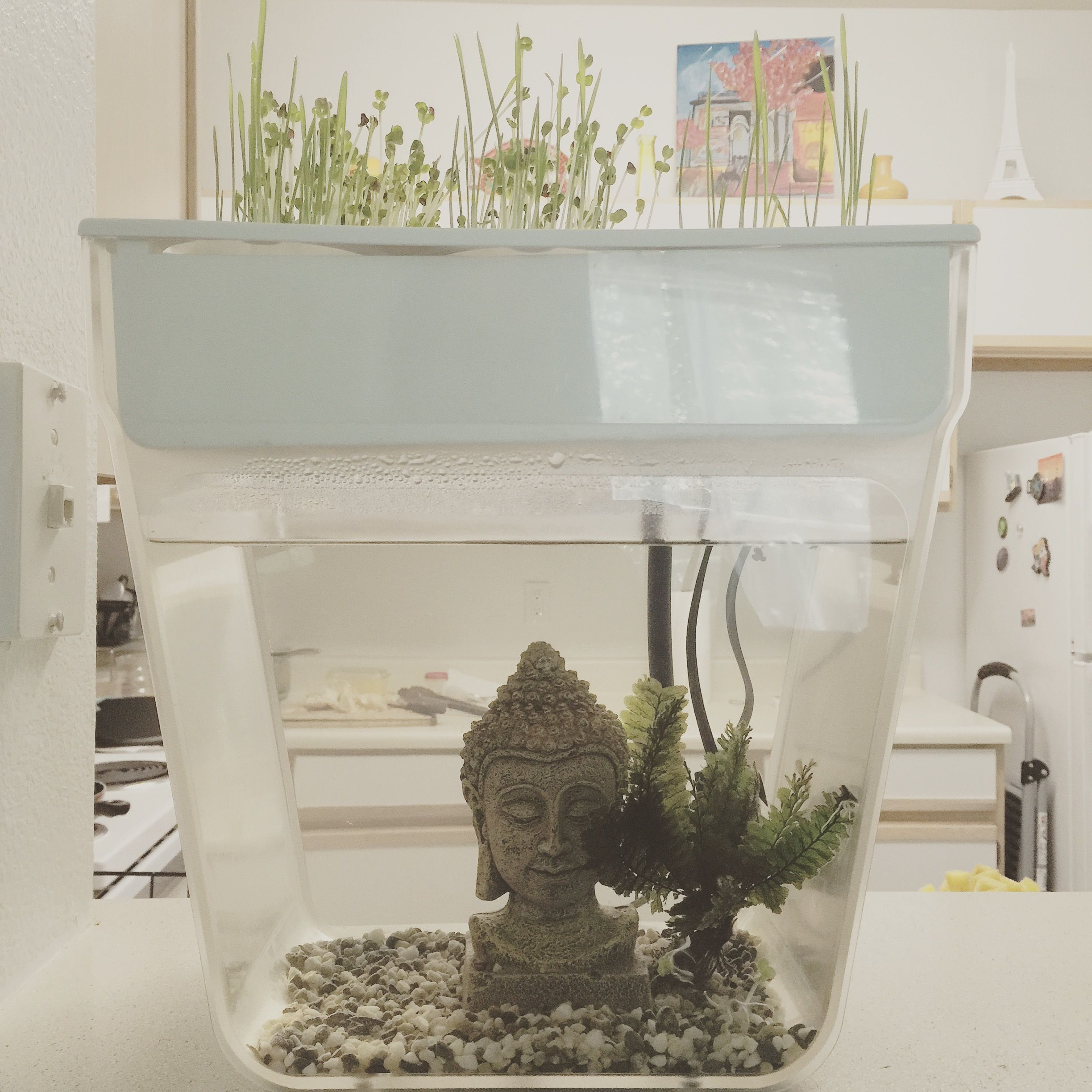 Back To The Roots' Water Garden; an aquaponics tank for