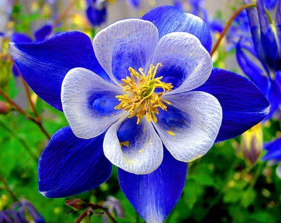 Most Beautiful Flowers Names Gallery Fabulous Flowers Pinterest