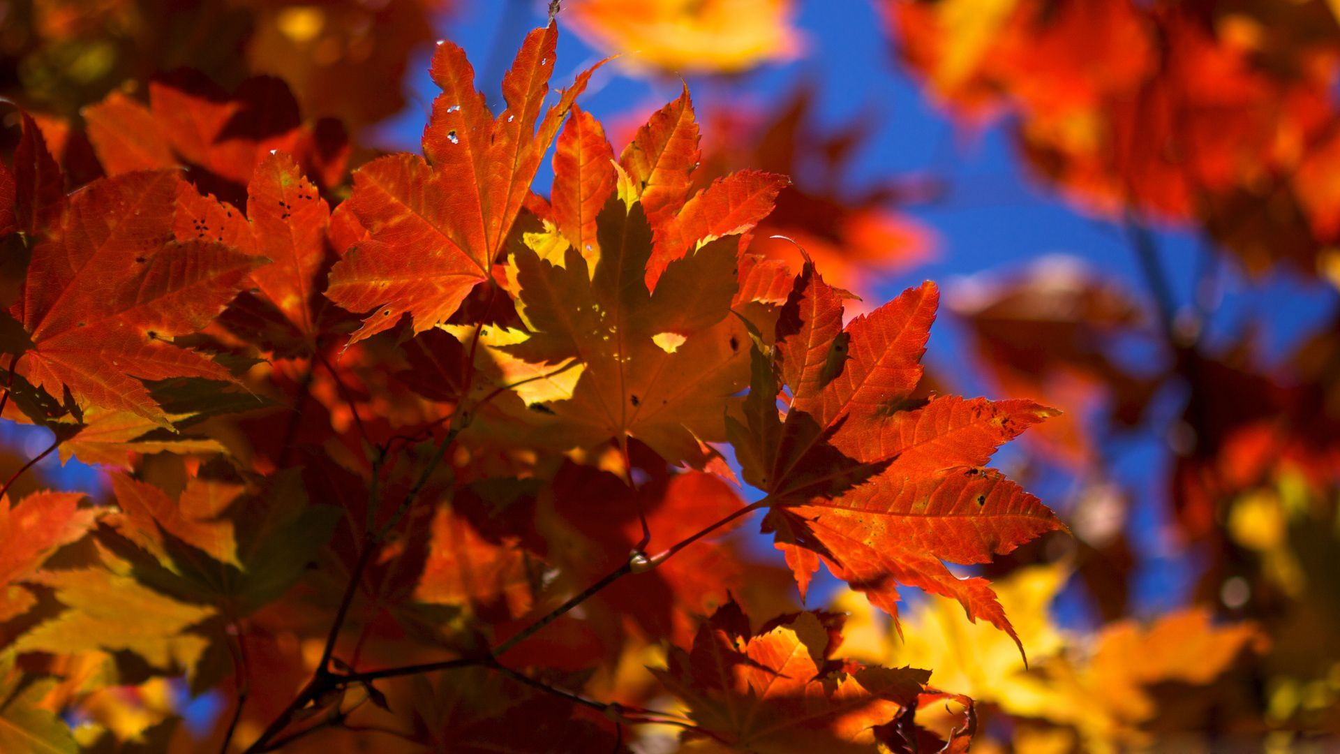 Fall Desktop Wallpaper High Resolution Click Wallpapers Autumn Leaves Wallpaper Autumn Forest Fall Wallpaper