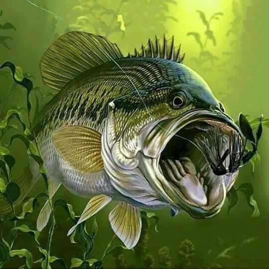 Bass dunway enterprises for Bass fish painting
