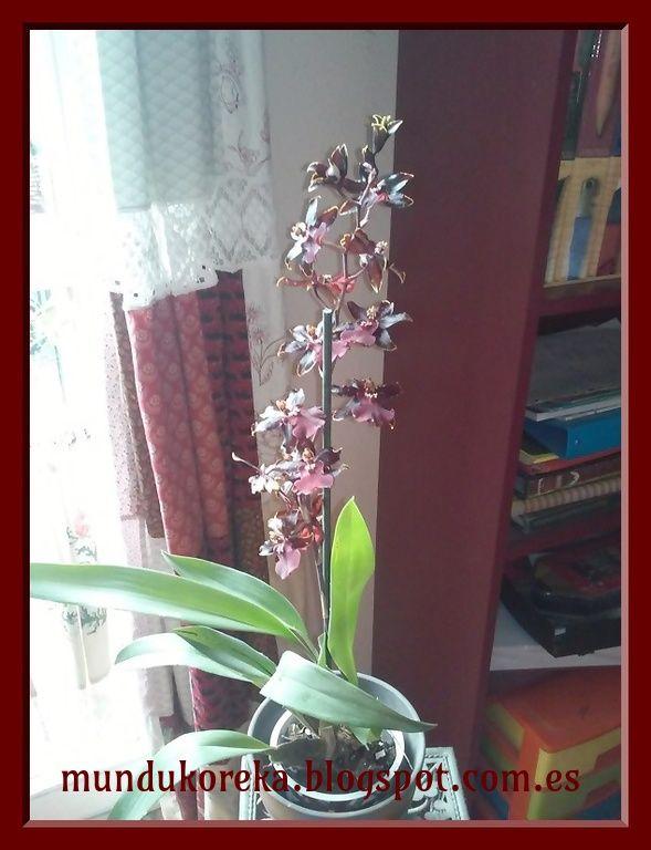 floración de cambria en enero