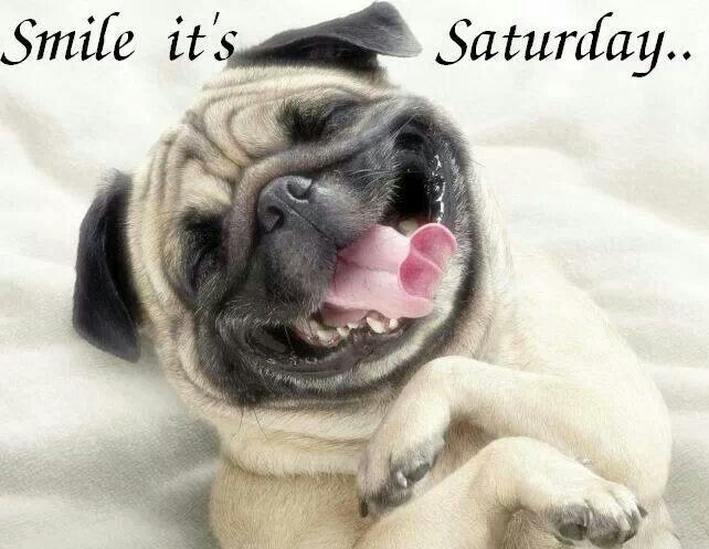 Funny Saturday Morning Dog Picture Quotes And Sayings