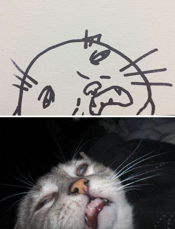 Poorly Drawn Cat Cat Drawing Funny Doodles Sleeping Drawing