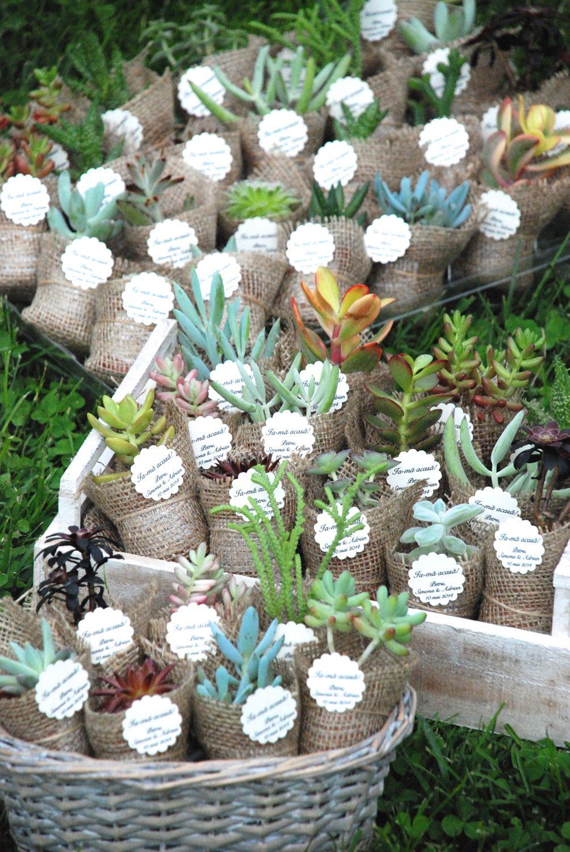 succulent favors Growing gift favors Pinterest