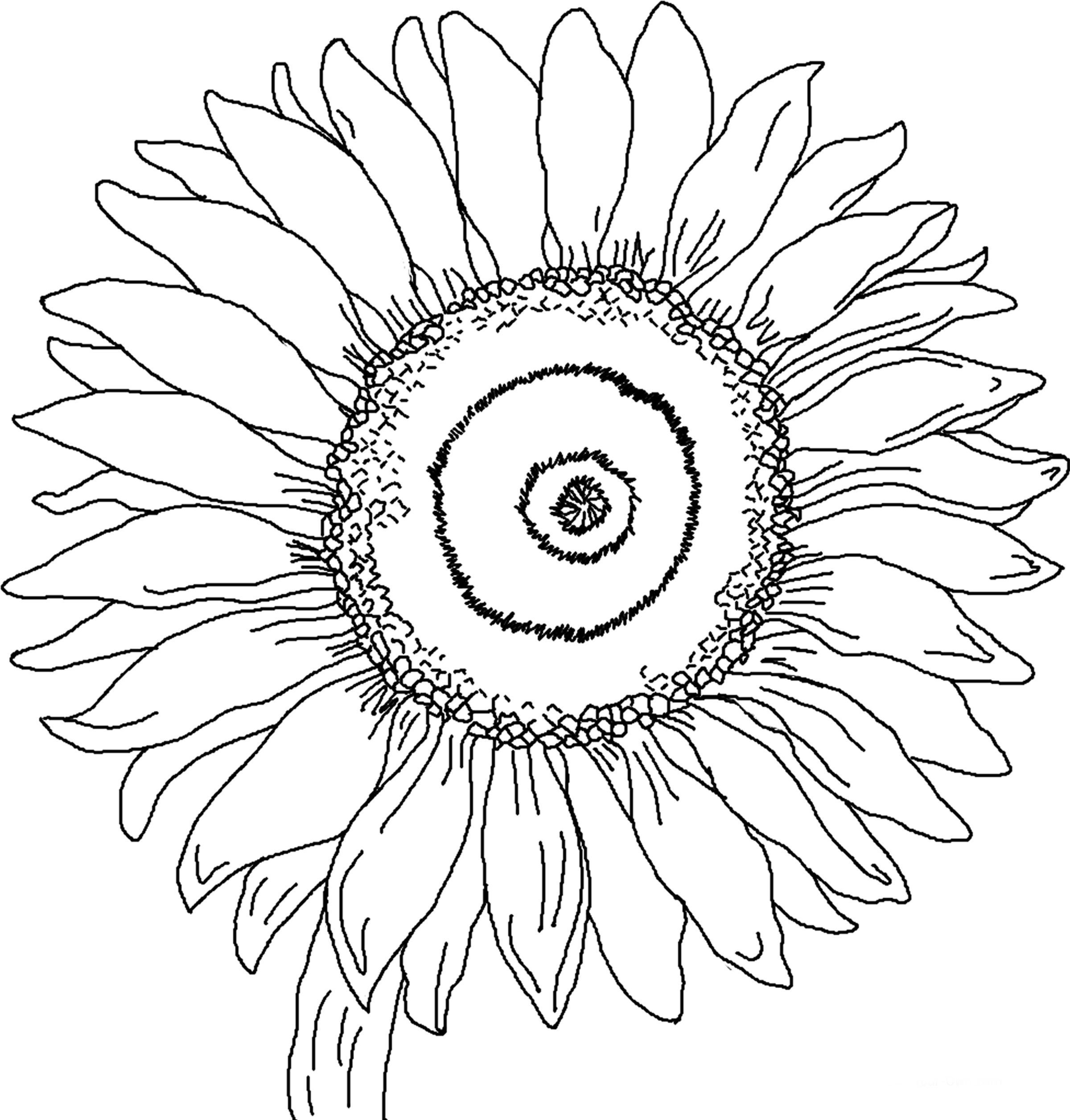 Sunflower Coloring Pages | crafts | Pinterest