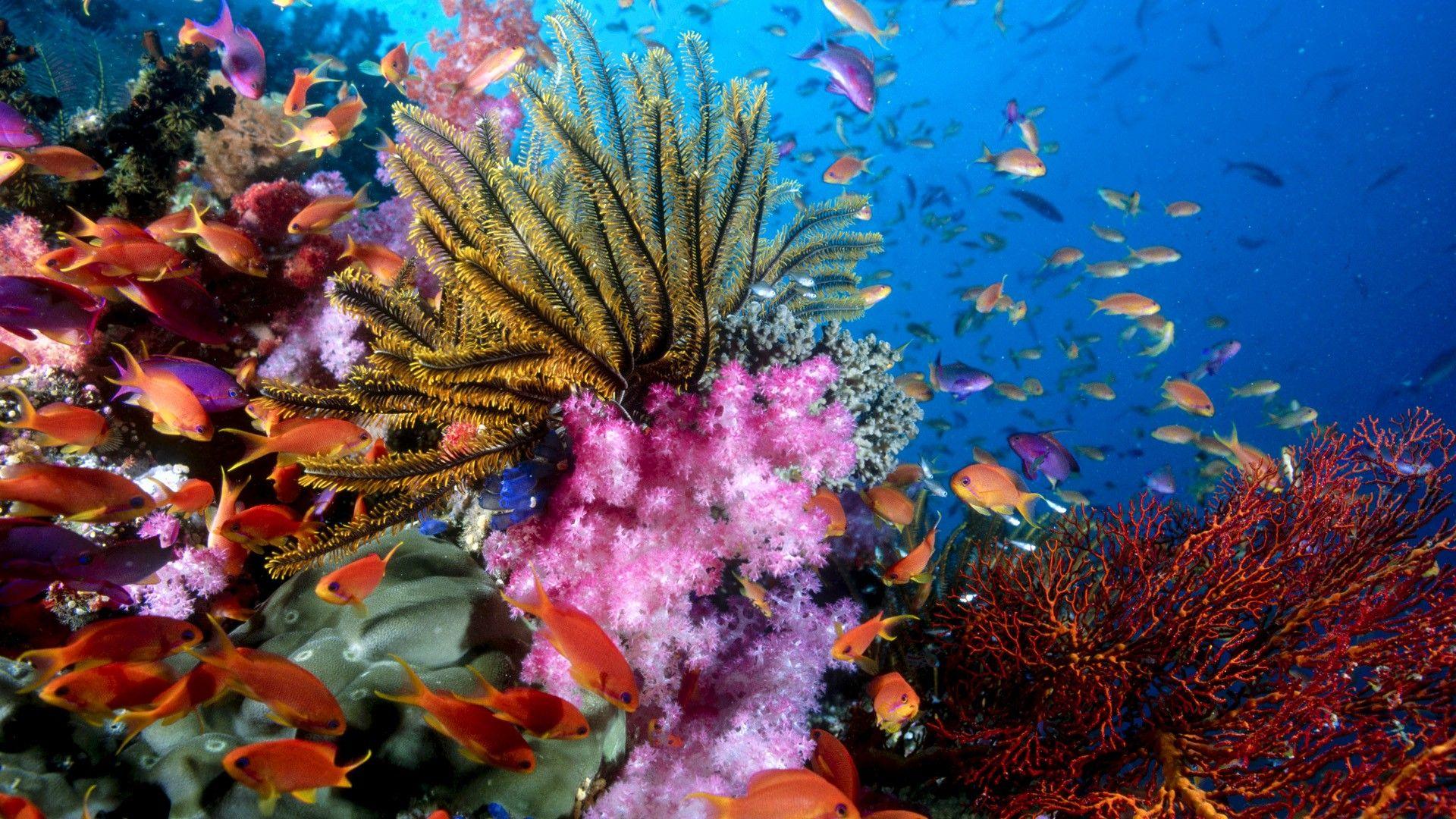 hawaii ocean underwater | underwater scene coral ocean wallpaper