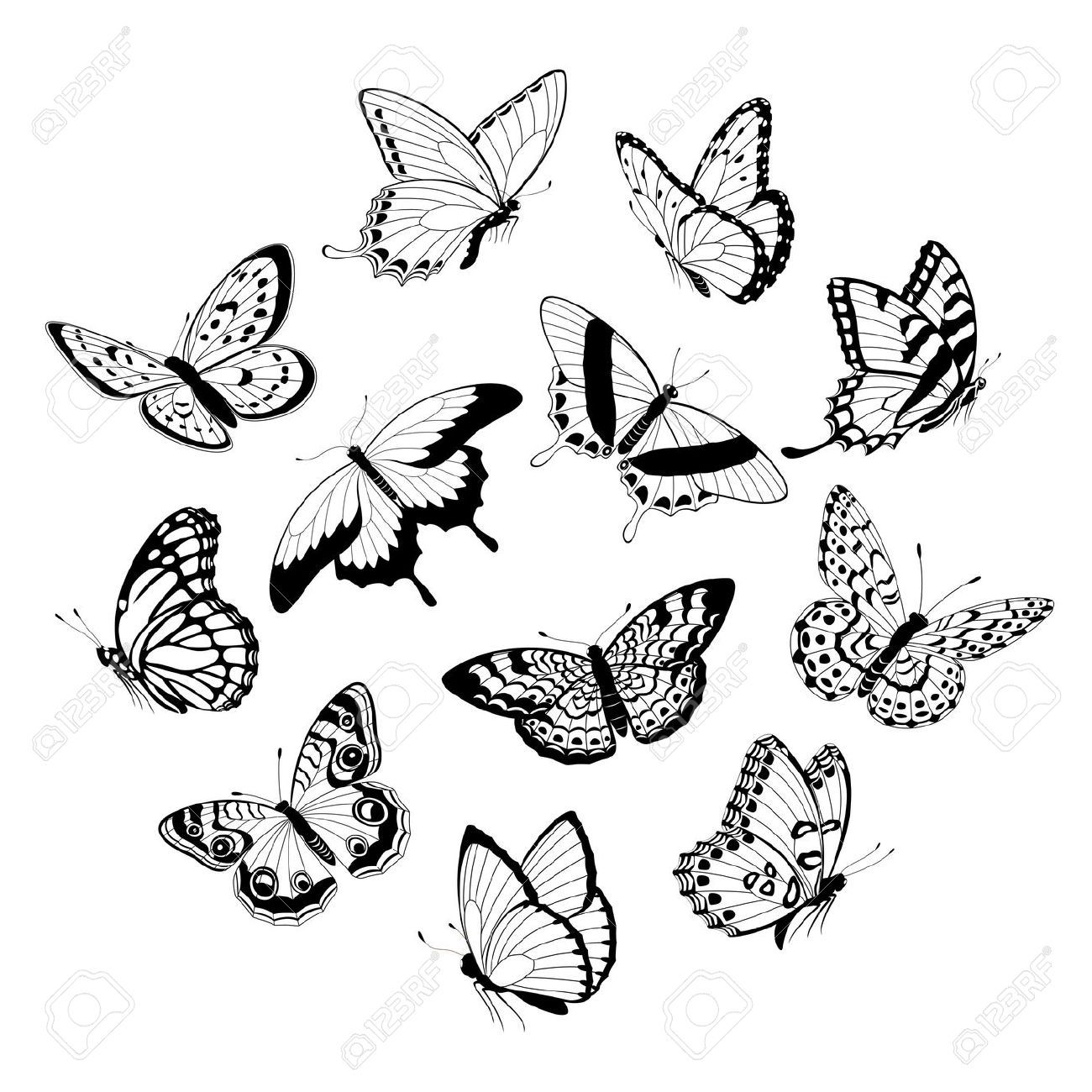 13898872 Set Of Flying Black And White Butterflies Isolated On White Background Stock Vector Jpg 1 White Butterfly Tattoo Butterfly Drawing Butterfly Outline