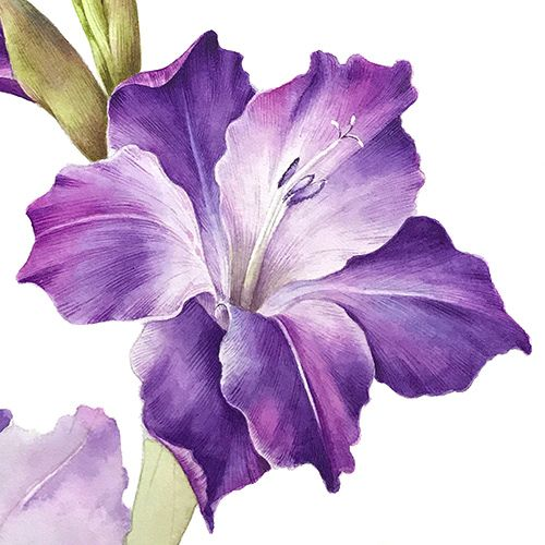 Gladiolus Flower On Behance Flower Sketches Flower Drawing Gladiolus Flower
