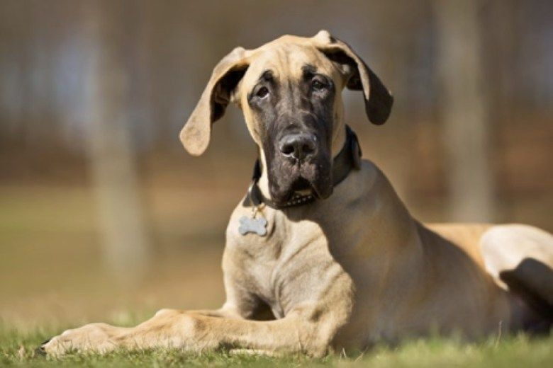 What Age Do Dogs Stop Growing Extra Large Dog Breeds Types Of