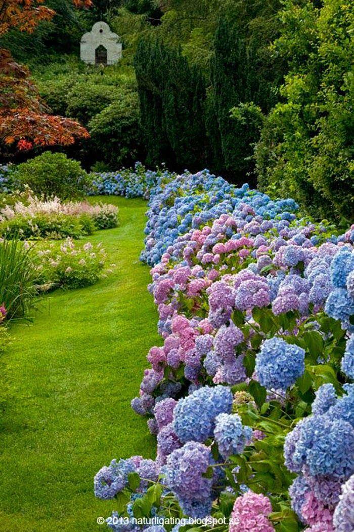 17 Dreamy Hydrangea Gardens That Are Giving Us Major Inspiration Hydrangea Landscaping Hydrangea Garden Beautiful Gardens