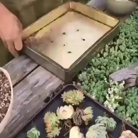 Planting Art! 😵 ❤️ -   18 cute planting Art ideas
