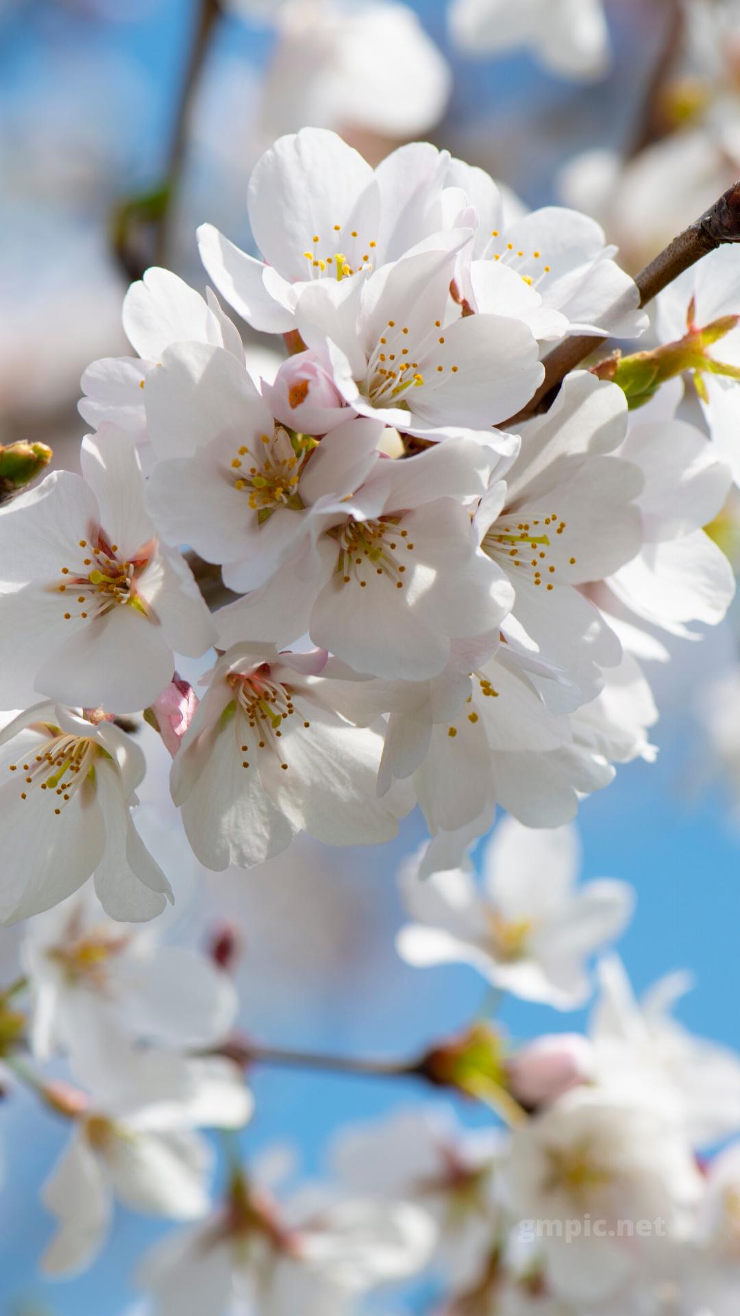Hd Spring Wallpaper Download In 2020 Spring Wallpaper Spring Flowers Wallpaper Spring Desktop Wallpaper