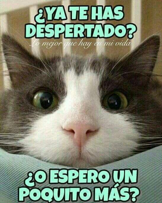 Pin By Ana Gimena On Wassap Funny Spanish Memes Good Morning Funny Morning Memes
