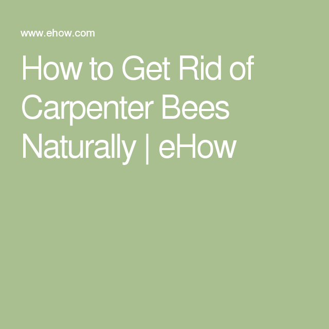 How To Get Rid of Bees | Animals and Insects I want or do ...