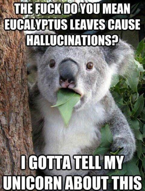 Wheres my unicorn? | Koala meme, Koala bear, Cute animals  Funny Koala Memes