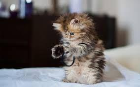 Resultado de imagen para felinos gatos