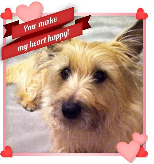 Wally Cairn Terrier Valentine Dog Cairn Terrier Dogs Cute Dogs