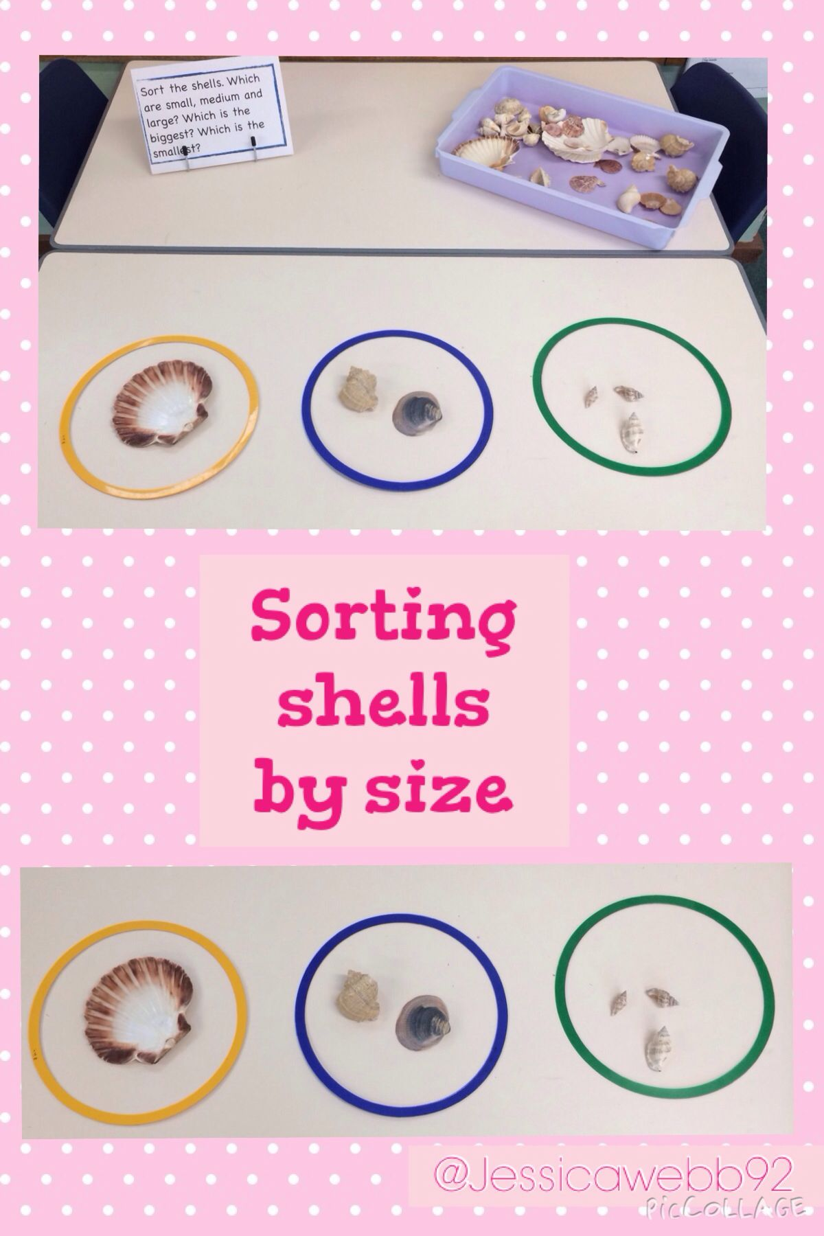 Sorting Shells By Size Eyfs