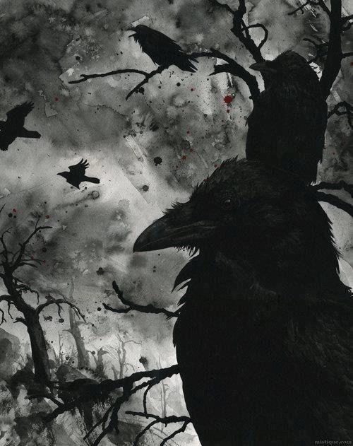 black crows birds halloween halloween pictures halloween images halloween ideas crows black crows