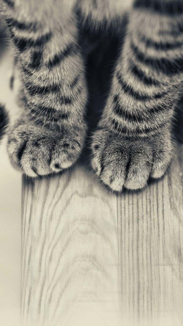 Pin By Christine Trz On Feet Iphone 6 Plus Wallpaper Animal Wallpaper Kitten Wallpaper