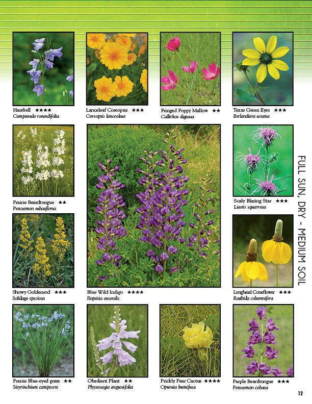Heart Leaved Skullcap Scutellaria Ovata Missouri Wildflowers Pinterest And Gardens