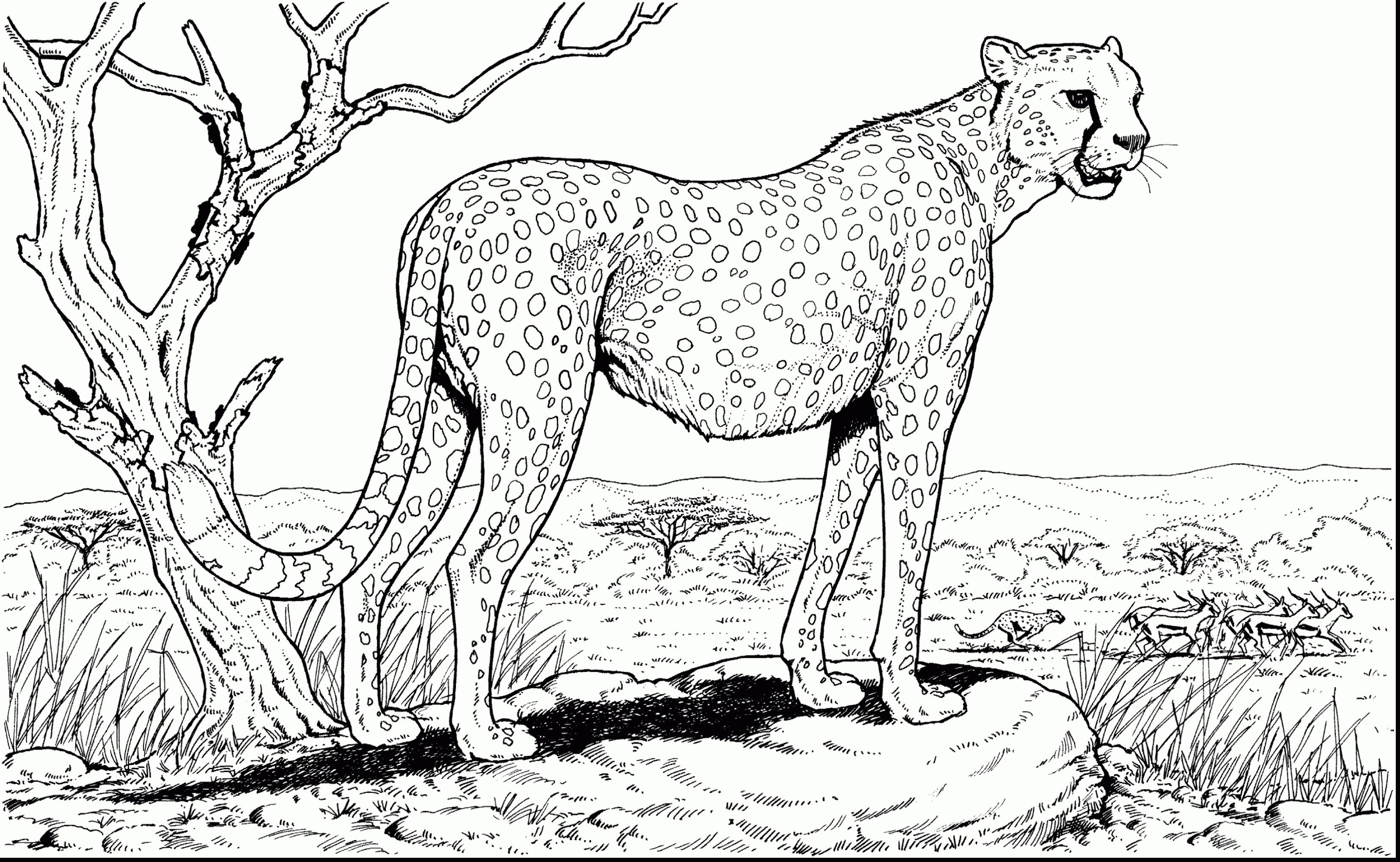 Cheetah Family Coloring Pages To Print Dieren Kleurplaten Kleurplaten Kleurplaten Voor Volwassenen