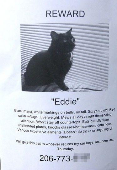 Reward Cats Funny Cat Posters