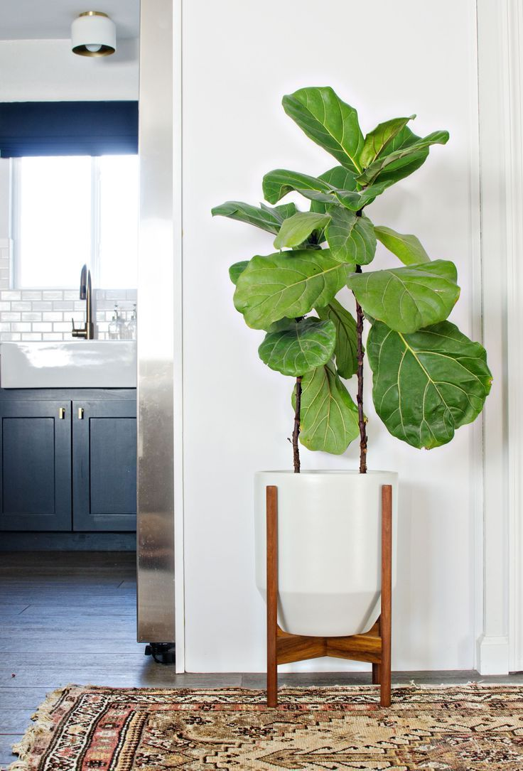 Large Indoor Planters For Trees Decor 3 In 2019 Pinterest