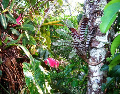Amazon rainforest & Oklahomau0027s Anti-Evolution House Resolution | Amazon rainforest