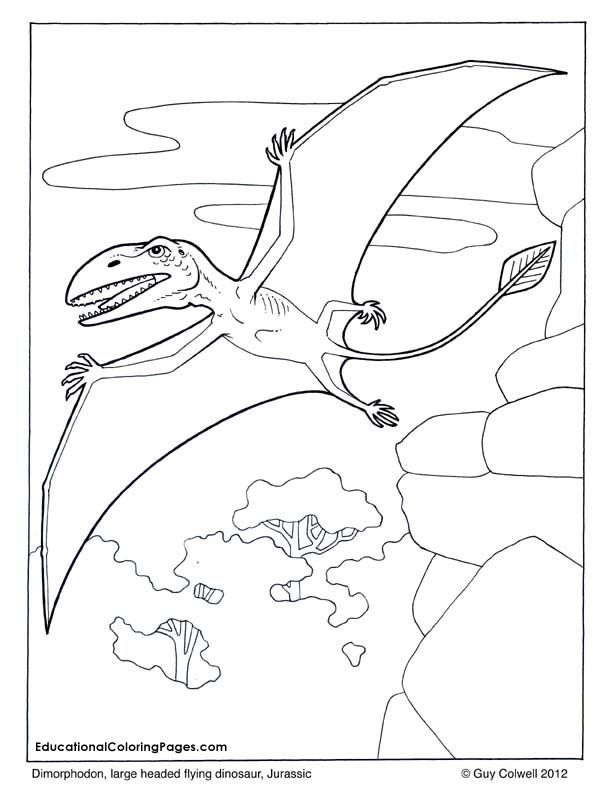 ZOOLOGY FLYING Dimorphodon Coloring Flying Dinosaur Pages