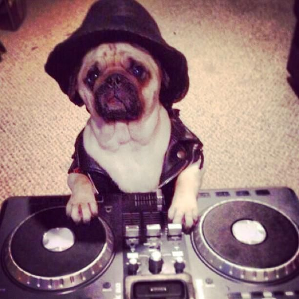 Dj Pugster My Favorite Dog Dj Ever Cutest Thing Ever Animal