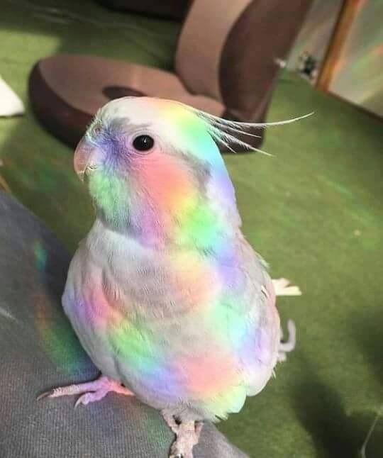 rainbow birb. | Cute birds, Cute animals, Colorful animals