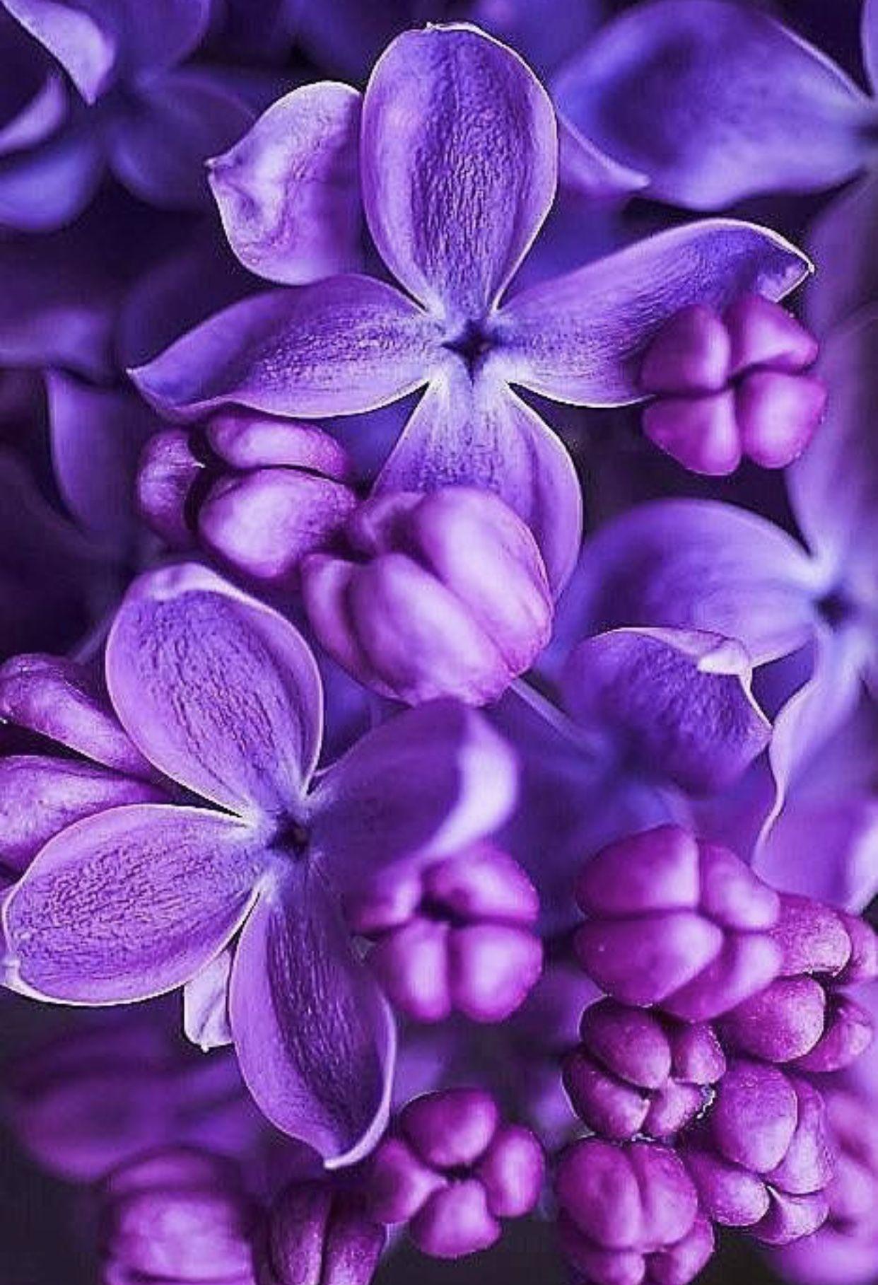 Pin By Lessya Lungu On Purple Purple Flowers Wallpaper Purple Flowers Light Purple Flowers Amazing light purple flower wallpaper