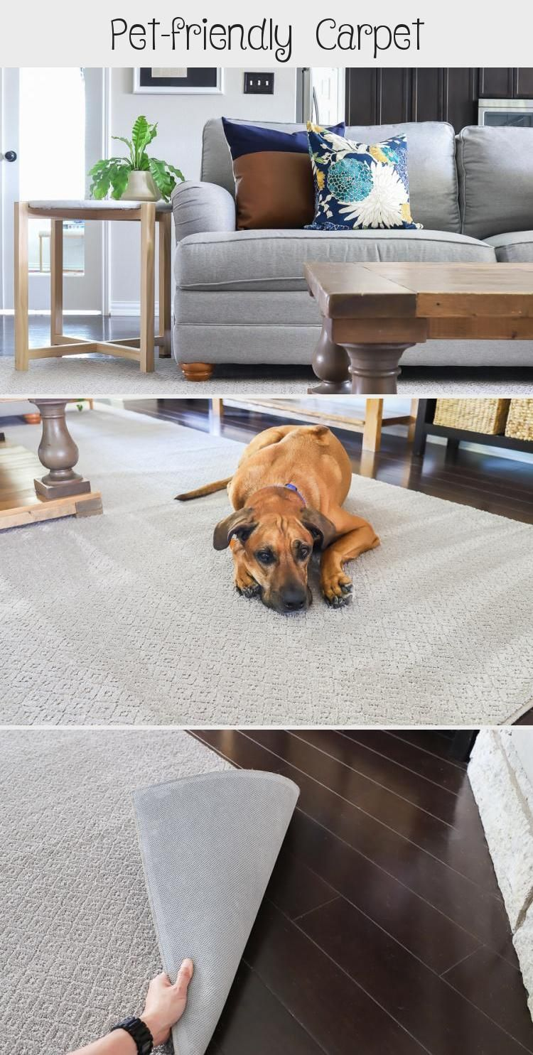 Petfriendly in 2020 (With images) Pet friendly carpets