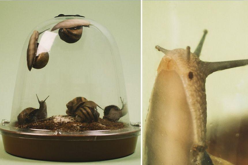 Grow Your Own Escargot Kit Worst Service Ever
