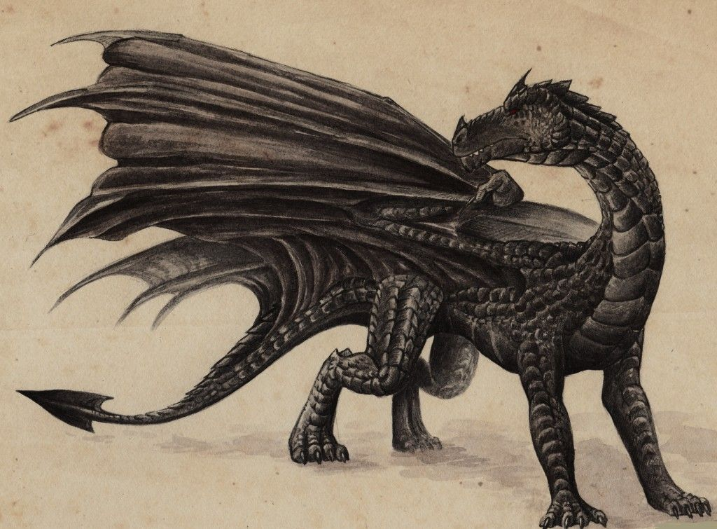 Top 10 Dragons In Harry Potter Harry Potter Creatures Harry Potter Dragon Black Dragon