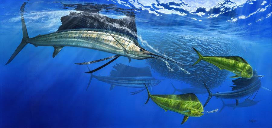 Turned On - Sailfish and dorado - a huge painting almost 2 ...