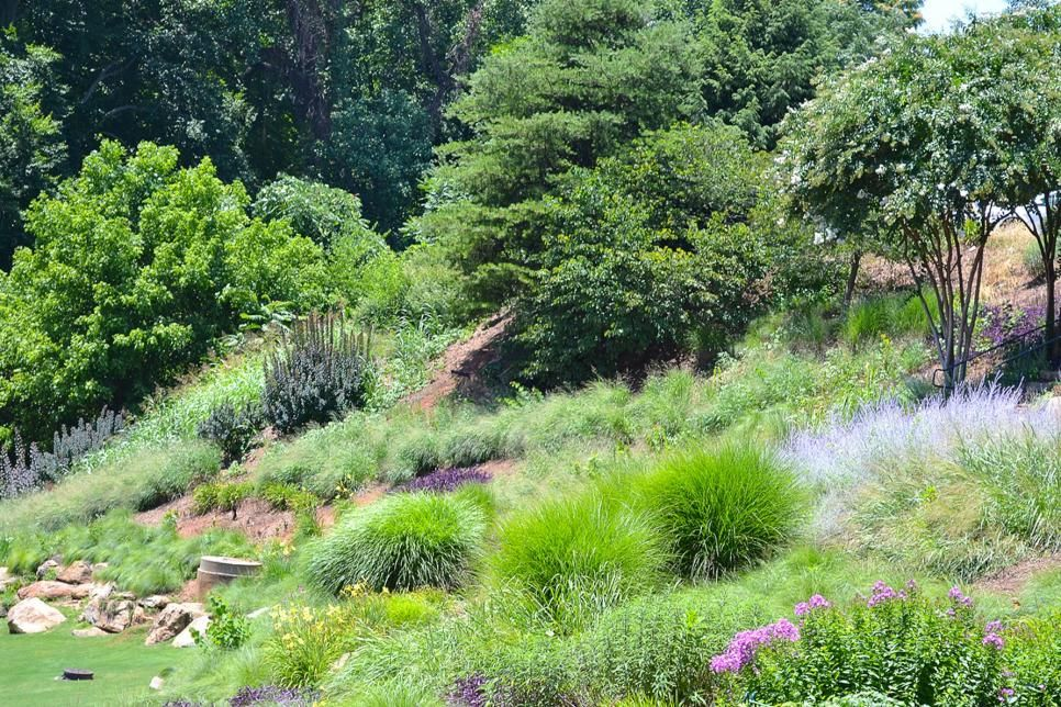 Search Viewer | HGTV | Water wise landscaping, Water wise ...