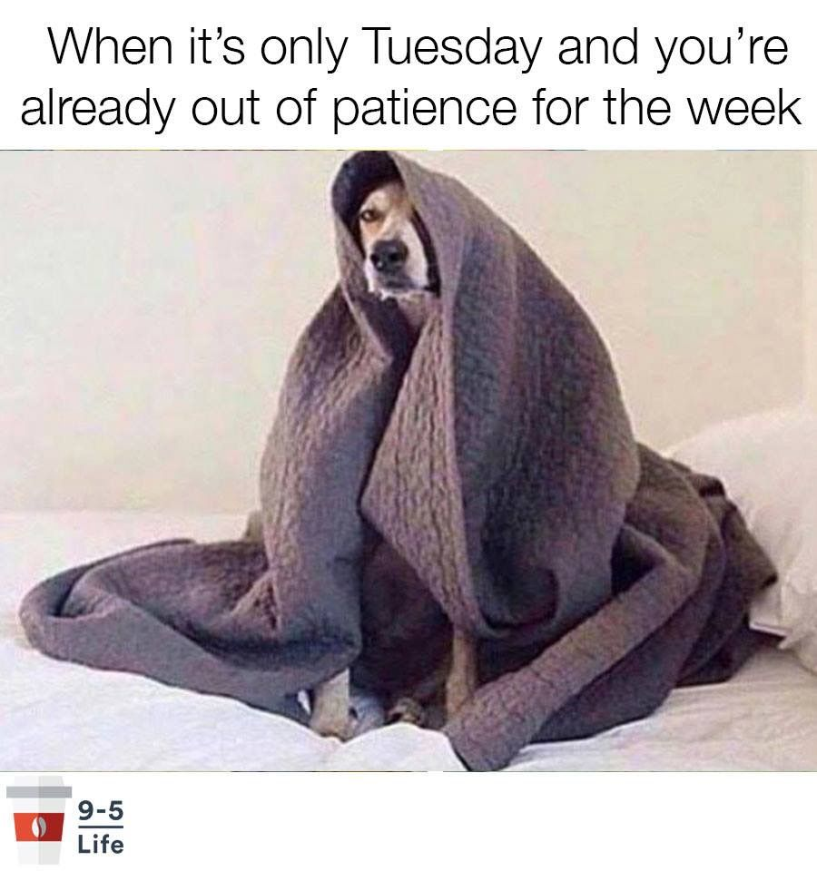 Already Out Of Patience On Tuesday Funny Monday Memes Tuesday Humor Work Humor