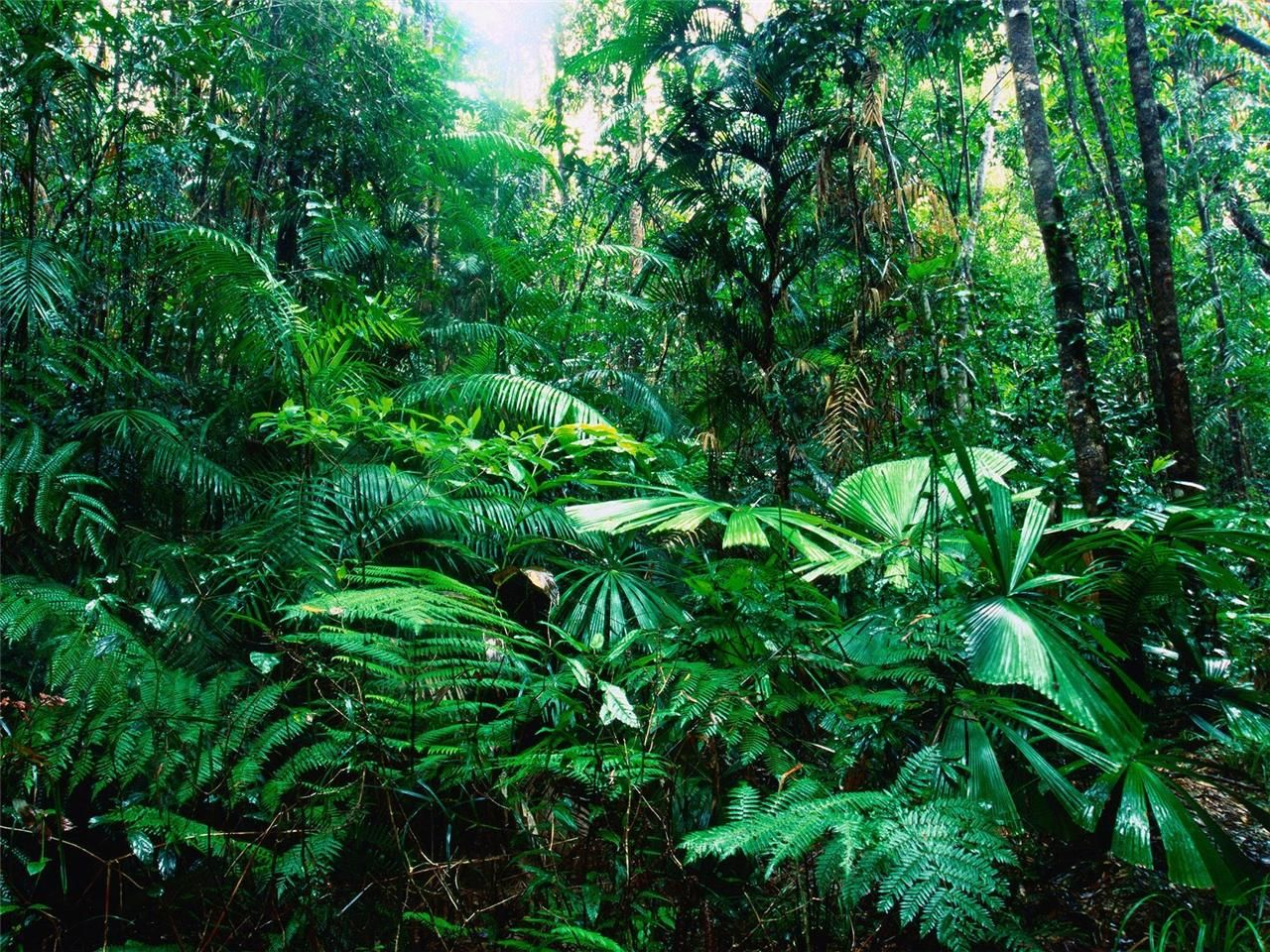 Details About Amazon Rainforest Glossy Poster Picture Photo Rain