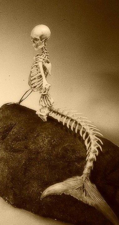 Skeletal Siren